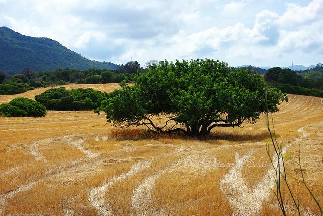 Nouveautés 2014 et paysage de Sardaigne