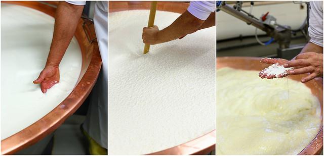 Comment est fabriqué le Parmigiano Reggiano ? Étapes de fabrication. Transformation en fromage